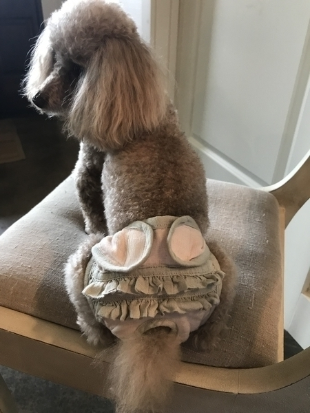 "Allison, IThis is my poodle, Chanel, wearing a very comfortable and sassy ""poochie panty"" made totally of lin..."
