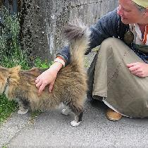 Petting Norwegian forest cat in Reykjavik. Wearing a linen serk and smokker -with linen trim.